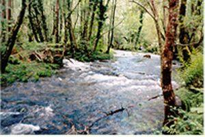 Río de Somozas